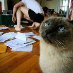 脱税証券アナリストとFXの確定申告